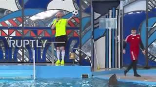 Russia: Vanda the Dolphin predicts Confederations Cup semi-finals