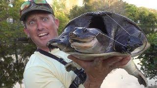 Backyard Fishing Bonanza! Large Mouth Bass, Freshwater Snook and a MASSIVE soft-shell Turtle