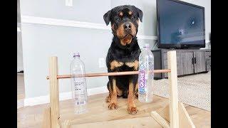 Rottweiler vs Home-made Bottle spinner toy |35