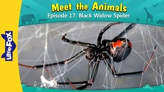 Meet the Animals 17 | Black Widow Spider | Wild Animals | Little Fox | Animated Stories for Kids