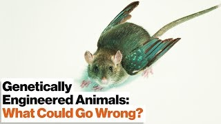 CRISPR's Gene Drive Could Revive Extinct Species–or Create New Ones   Jennifer Doudna