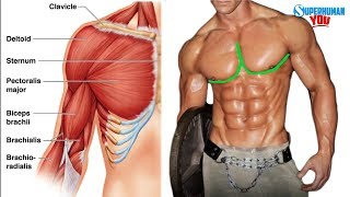 How To Get The ″Outer Chest Line″