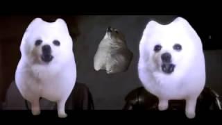 Gabe the dog Star Wars Cantina theme