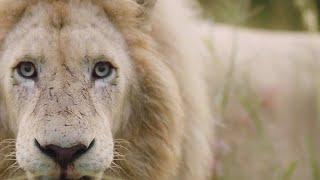 Operation Fang: The Lions | Lion Whisperer Membership