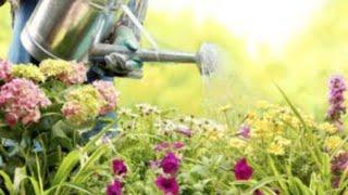 Bom dia Espírito Santo, casamento jardim que necessita de água