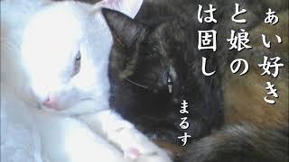猫あるある川柳 ~だぁい好き~ Vol.109