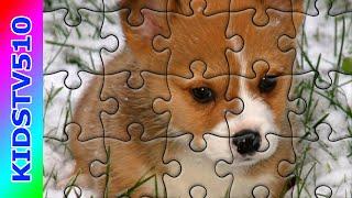 Puzzle Games | The Rabbit lol