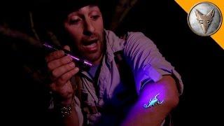 The Deadliest Scorpion in America! (Part 2)