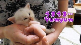 うまいうまい!保護した仔猫が突然オシャベリしはじめた! -3 Weeks Old Talkative Kitten Story