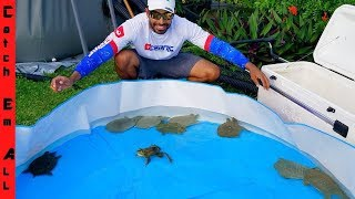 SAVING LIVE TURTLES from FOREIGN FOOD MARKET!