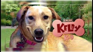Kelby K9 Live Stream