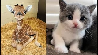 Cute baby animals Compilation cute moment of the animals - Soo Cute! #23