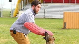 Experiencing the force of a police dog bite