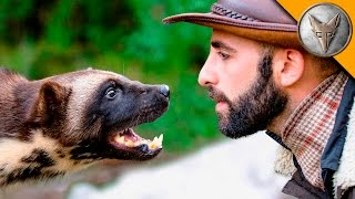 Wolverine Face-Off!