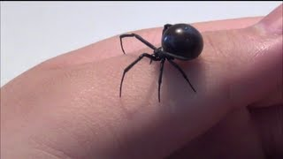 Black Widow Handling (HD)