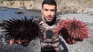 Would You Eat These??? Freediving, Spearfishing, Lingcod from 50ft Cliff
