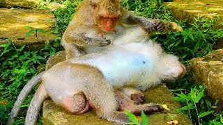 Very Pity Dankey Monkey, He's In Sick Of His Wound!
