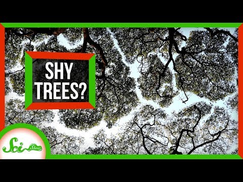 Why Do These Trees Refuse to Touch?
