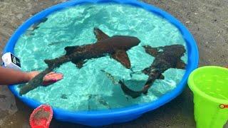 DIY Kiddie POOL FISH POND at BEACH!!!