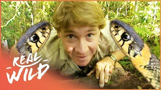 The Ten Deadliest Snakes In The World - With Steve Irwin   Real Wild Documentary