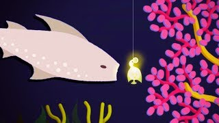 WE CAUGHT THE MAW Whale Shark! - Cat Goes Fishing Gameplay