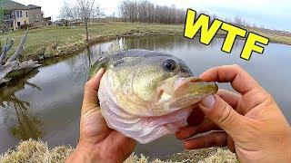 This TINY Pond has Mutant Fish!!! (INSANE Catch)