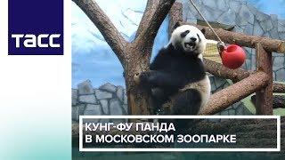 Кунг-фу панда в Московском зоопарке