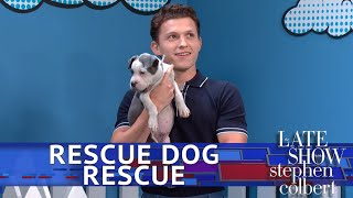 Rescue Dog Rescue With Tom Holland: Superhero Edition