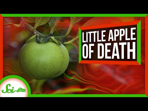 The Little Apple of Death