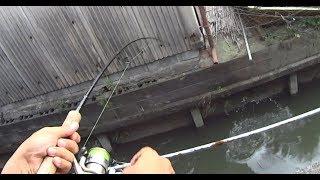 家の中からルアー釣りをしてみると・・・
