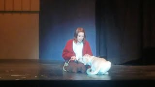 Adorable Amputee Dog Lands Role As Sandy In a School Production Of Annie