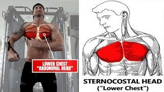 5 Forgotten LOWER CHEST Exercises For PERFECT Pecs