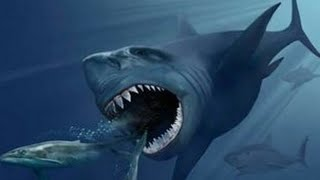 Black Demon Of The Sea | BLACK SHARK - Documentary Movies