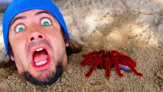 Buried in Sand and there's a GIANT CREEPY SPIDER