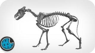 **SEIZURE WARNING** Incredibly Realistic Wolf Skeleton Animation