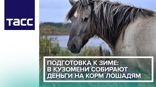 Подготовка к зиме: в Кузомени собирают деньги на корм лошадям