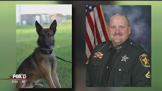 Polk County deputy forced to shoot, kill colleague's police dog after bite