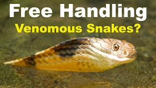 Free Handling Venomous Snakes (Cobras, Kraits, Vipers)