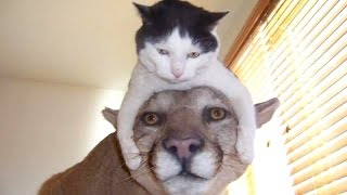 The funniest and most hilarious ANIMAL #1 - Funny animal compilation - Watch & laugh!