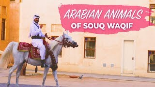 Arabian animals in Souq Waqif Qatar