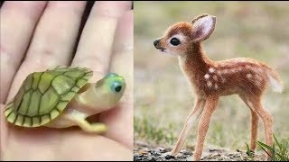 Cute baby animals Compilation cute moment of the animals - Cutest Animals #3