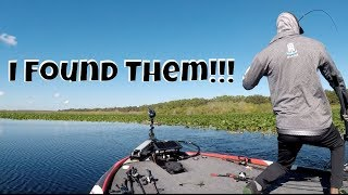 Lake Toho FLW Tour Vlog