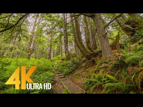Iverson Railroad and Northwest Timber Trails - 4K Virtual Forest Walk - Short Preview Video