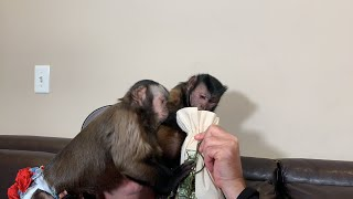 Monkeys Sharing a Snack LIVE & UNEDITED!