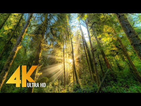 FOREST DREAMS in 4K - 12 HOURS Relaxing Virtual Nature Walk with Calming Piano Music