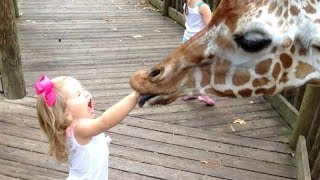 FORGET CATS! Funny KIDS vs ZOO ANIMALS are WAY FUNNIER! - TRY NOT TO LAUGH