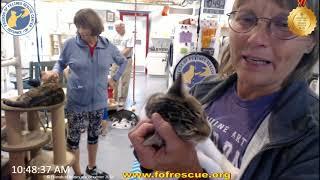 Adoption of Tinora. 09/19/19 Friends of Felines Rescue Center (FFRC)