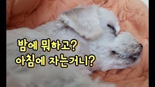 아침 잠이 많은 강아지