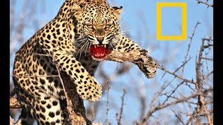 Unique Super Predators - African Wildlife (2018 Documentary)