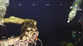 ROV SuBastian Dive 074- Deep Sea Corals of PIPA